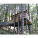 Vertical Horizons Tree-house Paradise For Your Nesting