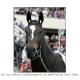 Zenyatta: Horse Of The Year