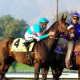 Zenyatta's Breeders Cup Defeat Disappoints Many