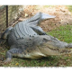 Forest officials rescue crocodile in Bijnor