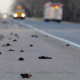 Dead Birds Dropping In Louisiana