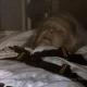 Zsa Zsa Gabor Hospitalized