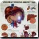 Kidneys transplanted between HIV-infected patients