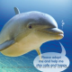 Scientists test Japanese dolphins' visual capacity with plasma TVs